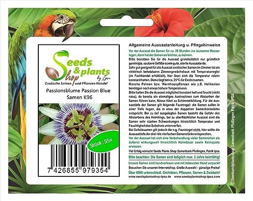 55 planta jardín de pasiflora pasión azul semillas semillas nuevas K96: Amazon.es: Jardín