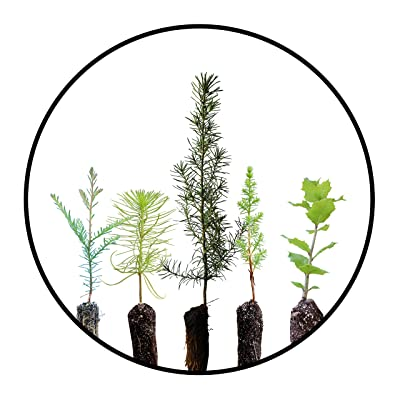 Trees of Monterey | Collection of 5 Live Tree Seedlings | The Jonsteen Company : Garden & Outdoor