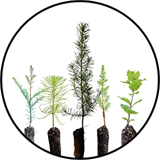 product image for Trees of Monterey | Collection of 5 Live Tree Seedlings | The Jonsteen Company