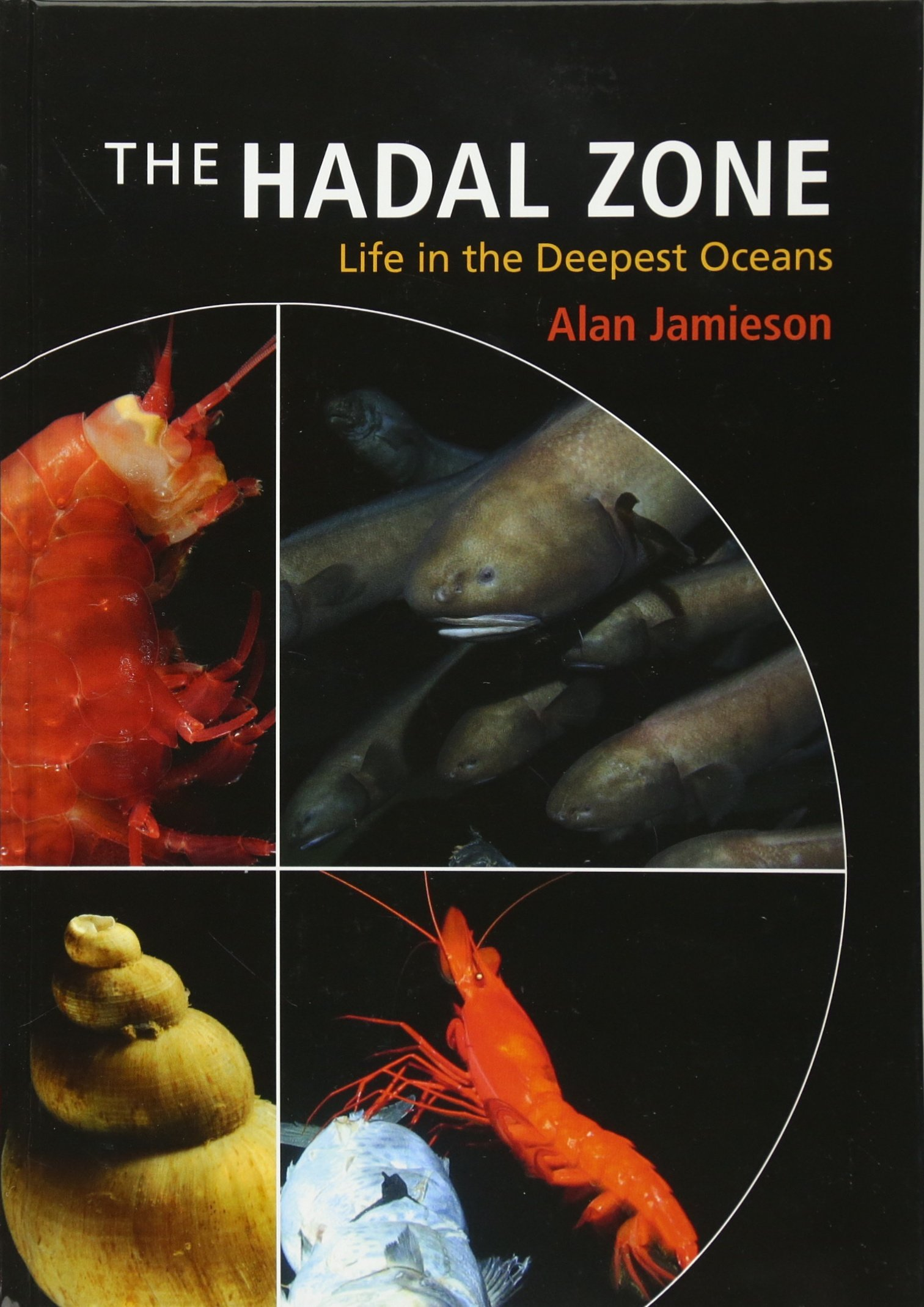 The Hadal Zone: Life in the Deepest Oceans: Amazon.co.uk: Jamieson, Alan:  9781107016743: Books