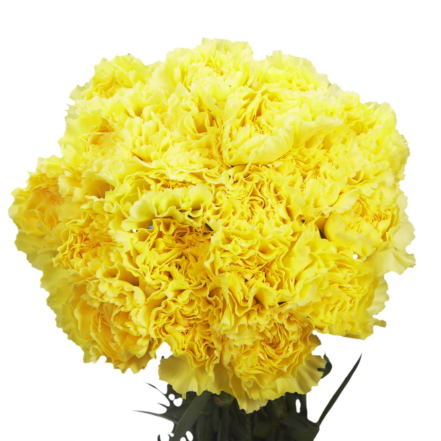 GlobalRose 100 Yellow Carnations - Fresh Flower Delivery