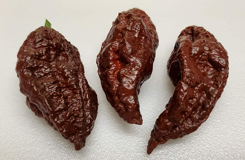 10 x Chocolate Carolina Reaper Pepper Seeds Rare Color World Record Pepper