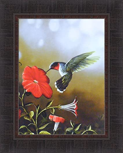 Amazon.com: Ruby Throated Hummingbird by Jim Hansel 17x21 Flower Bird Wildlife Framed Art Print Wall Décor Picture: Posters & Prints