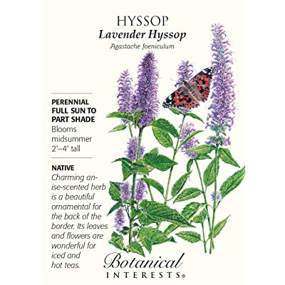 Hyssop Lavender Seeds - 250 mg - Perennial: Toys & Games