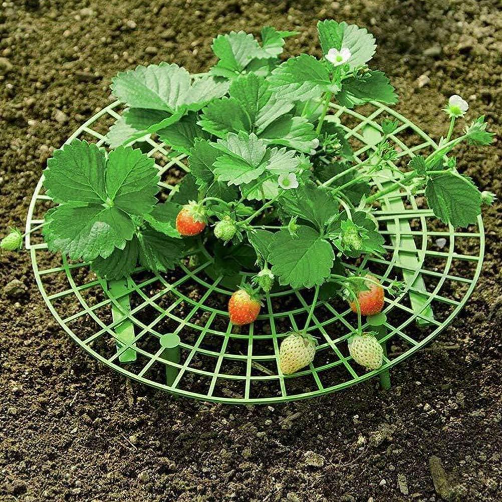 Anewu Plateau de Croissance des Fraises Supports de fraisiers pour emp/êcher Les Fraises de pourrir Les Jours de Pluie Outil de Culture des Fraises