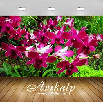 Avikalp Exclusive Awi3163 Tropical Red Orchid In The Rain