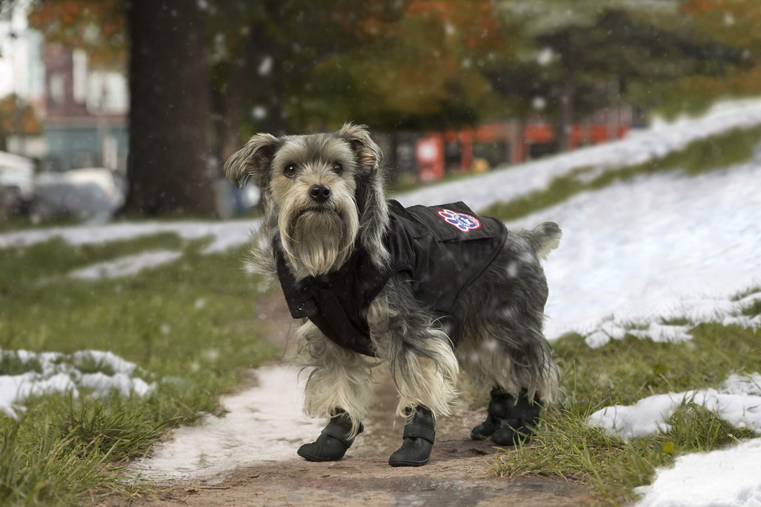 Canada Pooch Everest Explorer Jacket, Black, Size 20