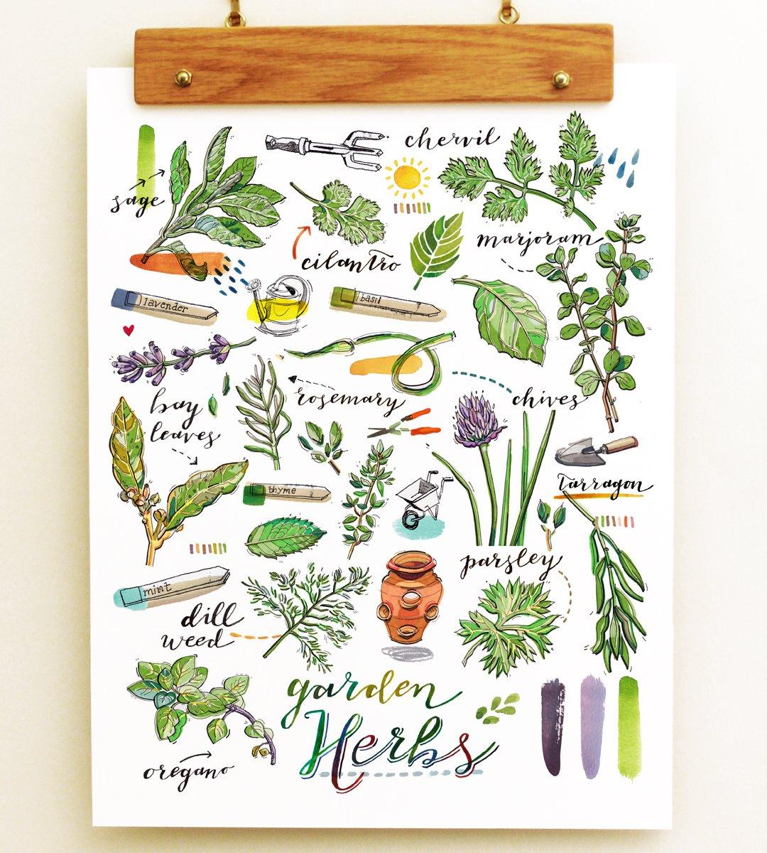 Herbs Print.
