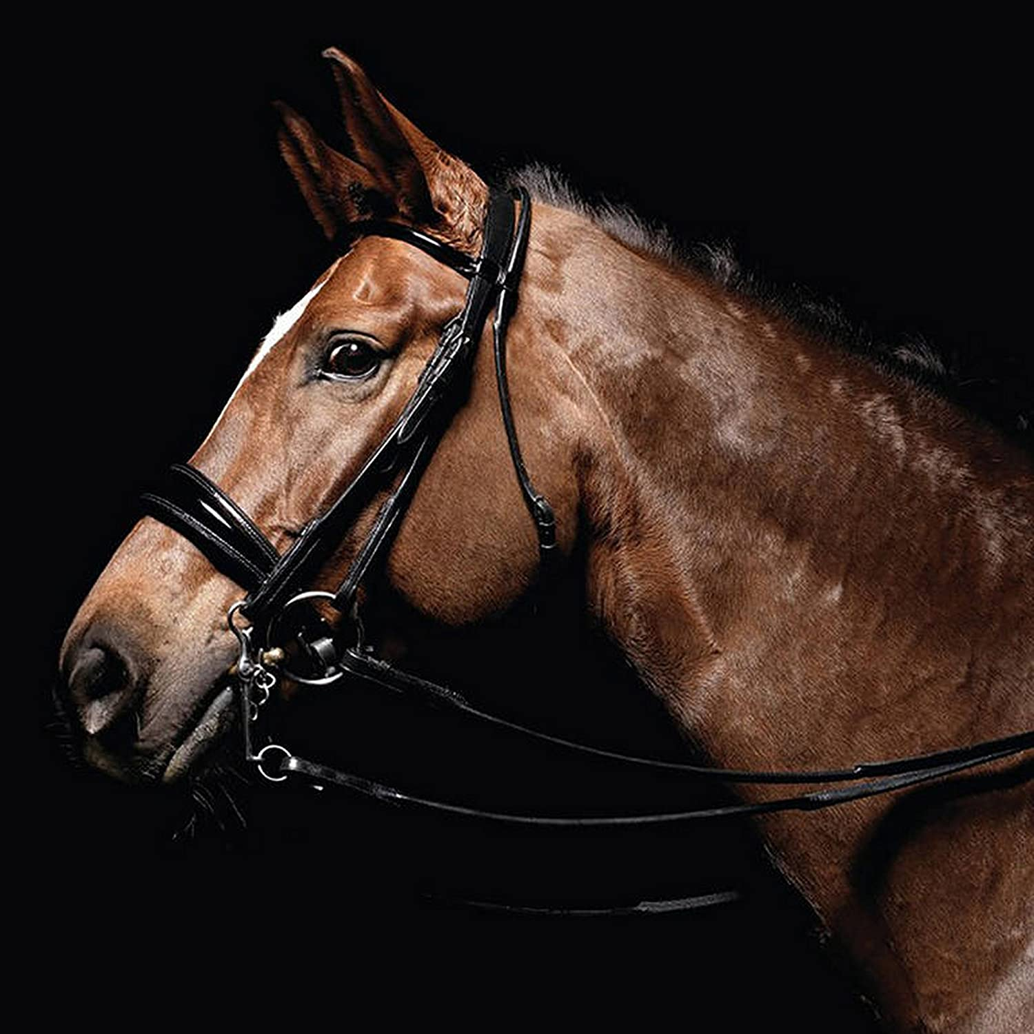 Caldene Bridle Double Dressage Patent Padded With Rubber Lined Reins UTTL158_1