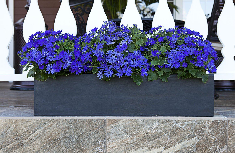 Amedeo Design ResinStone 2513-11L Modern Window Box, 24 by 8 by 8.5-Inch, Limestone by Amedeo Design