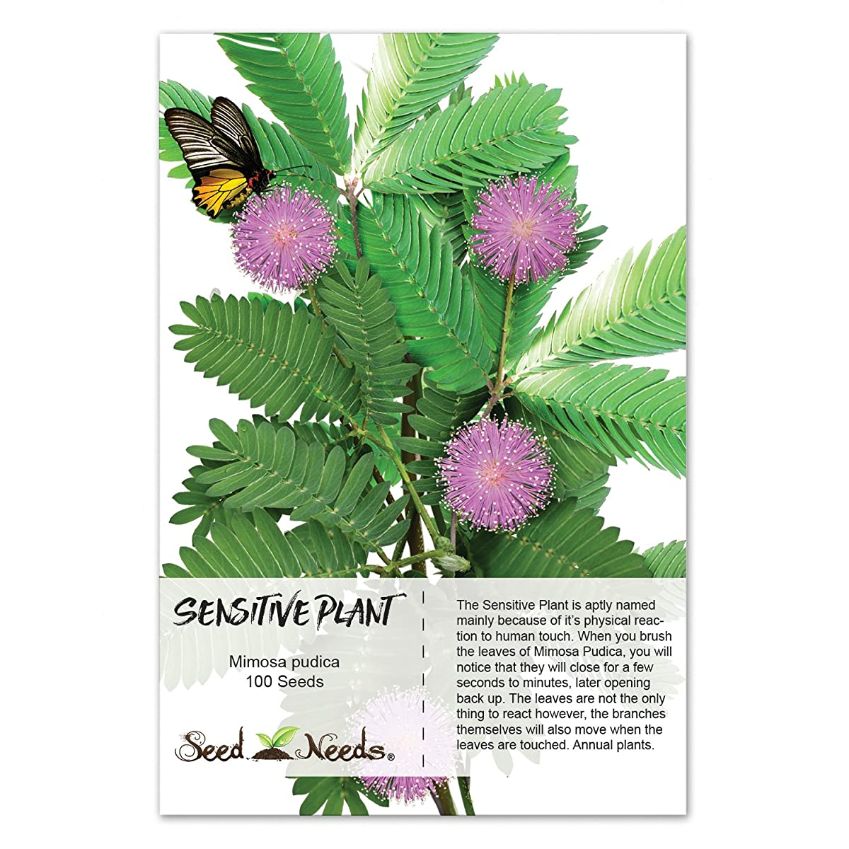 Package of 100 Seeds, Sensitive Plant Compact Growth (Mimosa Pudica) Non-GMO Seeds by Seed Needs