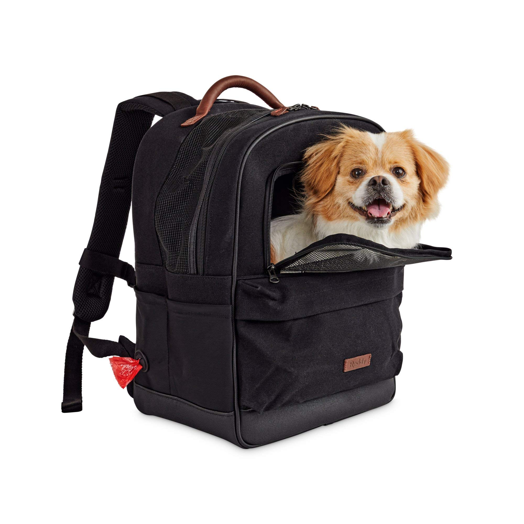 Reddy Black Cotton Canvas Pet Carrier Backpack, 16'' H x 13'' W x 8'' D, Small