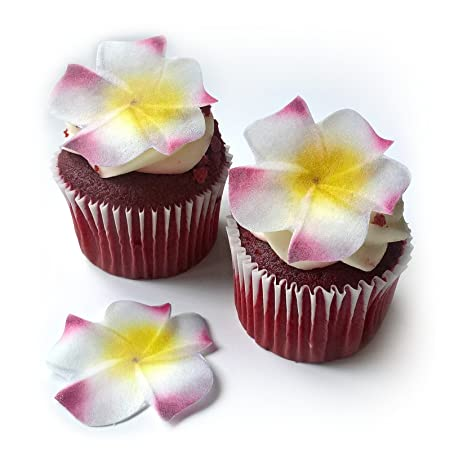 Amazon 24 plumeria flower flat edible wafer paper flowers 24 plumeria flower flat edible wafer paper flowers very small 15quot flower cake cupcake mightylinksfo