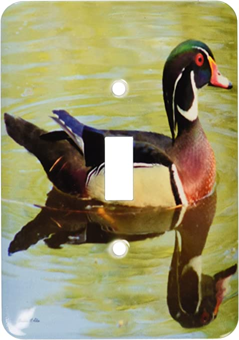 Photography Single Toggle Switch Multicolor 3dRose lsp/_6566/_1 Wood Duck Reflections