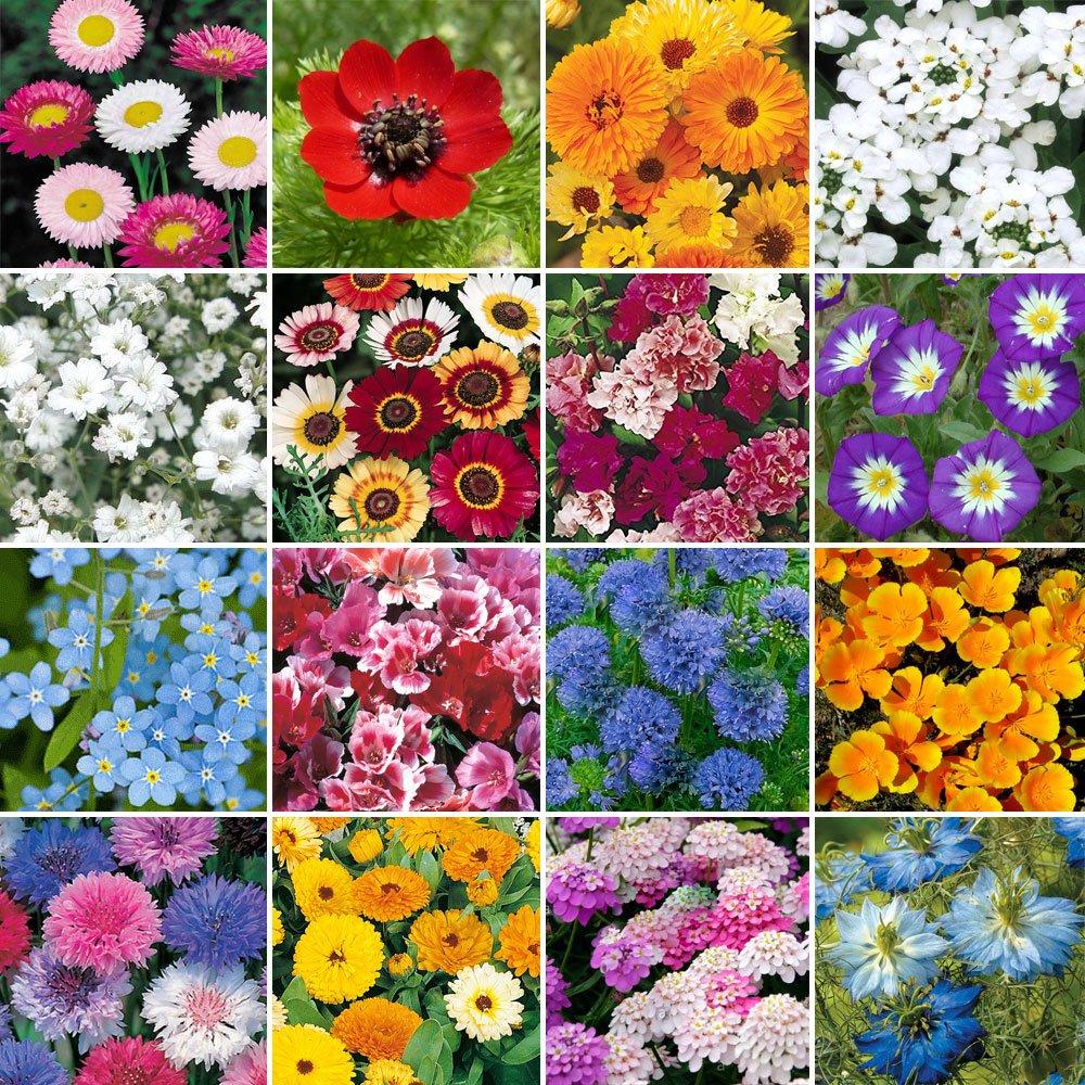Wild Flower Premium Seed Meadow Mix Wildlife Daisy Plants   80/20 Grass/Flowers (50g) GroundMaster