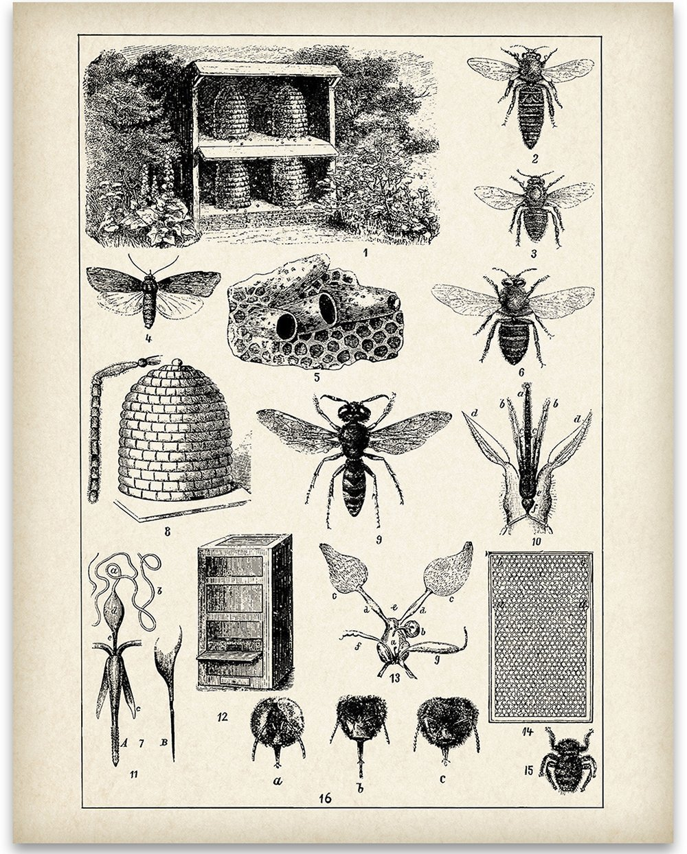 Bee Keepers Chart - 11x14 Unframed Art Print - Great Gift for Beekeepers and Nature Lovers