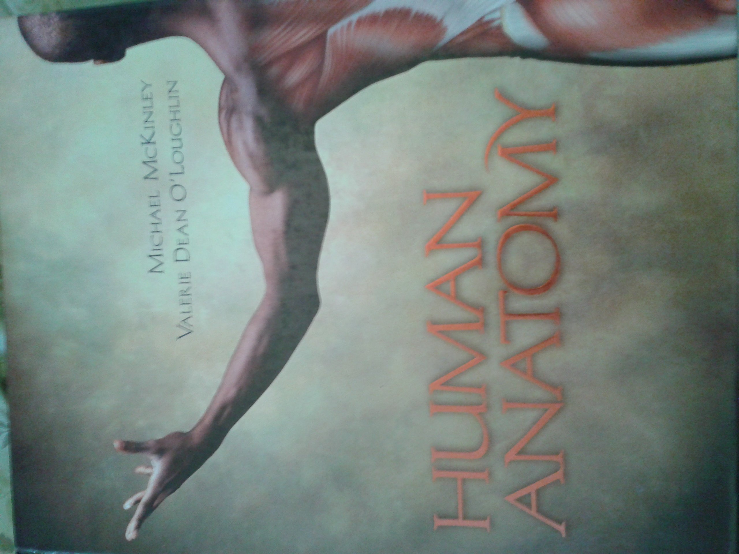 Human Anatomy Valerie Dean Mcki Michael Poloughlin