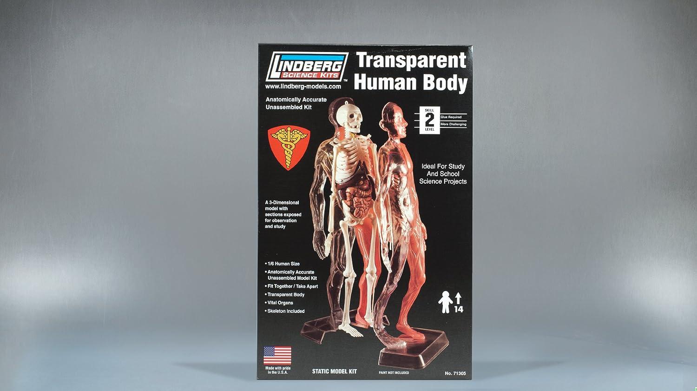 Amazon.com: Lindberg Transparent Visible Human Body 1/6 Scale ...