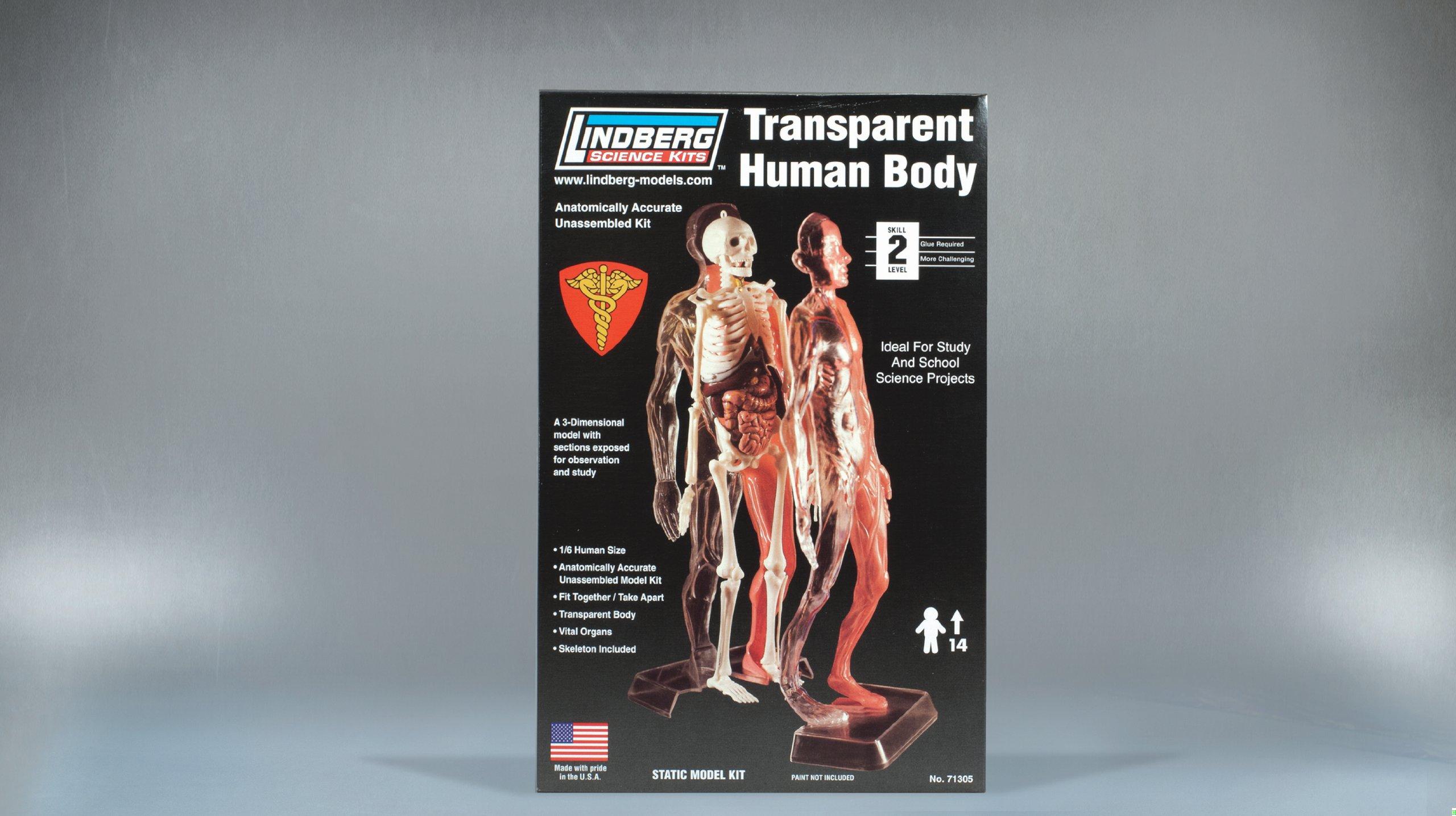 Lindberg Transparent Visible Human Body 1/6 Scale Plastic Model Kit