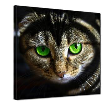 "Bilderdepot24 Cuadros en Lienzo""Gato con los ojos verdes"" 100x100 cm - listo tensa"