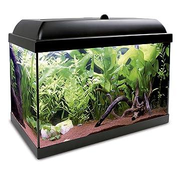 ICA KHA25N Kit Hydra 25 para Agua Dulce: Amazon.es: Productos para mascotas