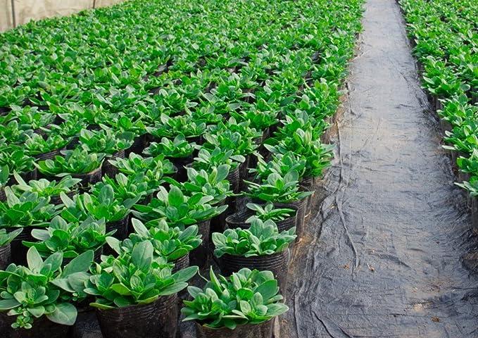 28m² Bewässerungsvlies Bewässerungsmatte Filtervlies Speichervlies 300g 2m breit