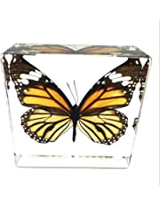 """Butterfly Paperweight Paperweights Specimen Specimens(3"""" x 3"""" x 1"""")"""
