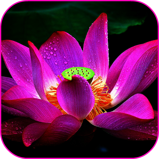Lotus flower wallpaper appstore for android - Flower wallpaper dp ...