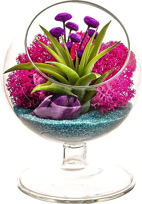 "Bliss Gardens Air Plant Terrarium - 4"" Round Glass Pedestal Kit - Turquoise Passion"