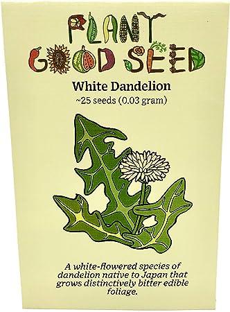 White sage 20-750 Seeds Organic Herbs salvia apiana Medicinal Rare Perennial 20 Seeds