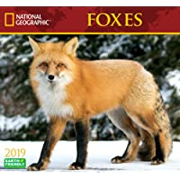 National Geographic Foxes 2019 Wall Calendar