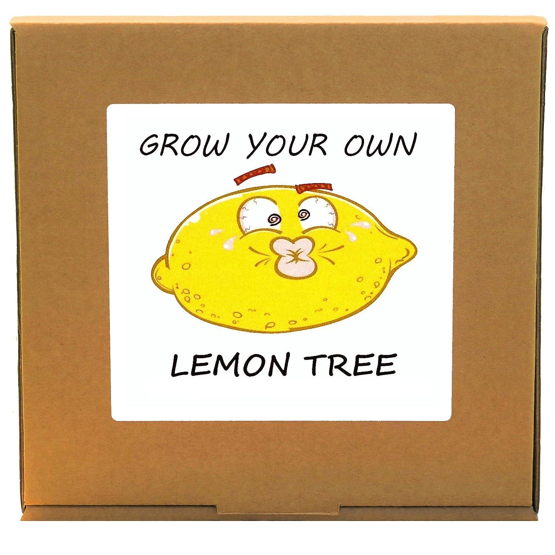Grow Your Own Citrus Lemon Tree Plant Kit - Indoor/Windowsill Gardening GrowYourOwnPlants