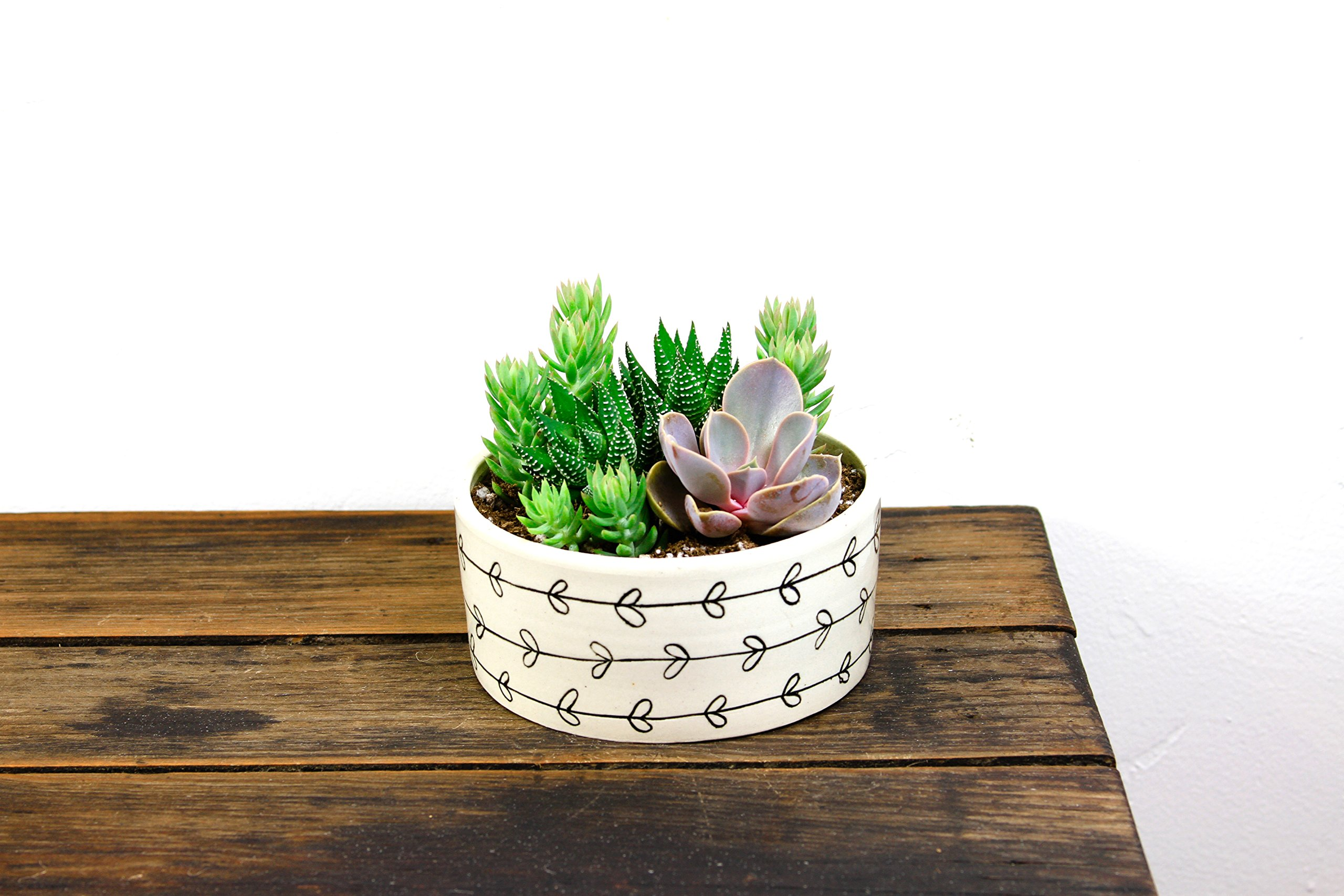 Shop Succulents Heart Vine Handmade Ceramic Planter with Succulents