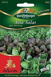 Asia Salat Red Giant Japanese Greens Samen