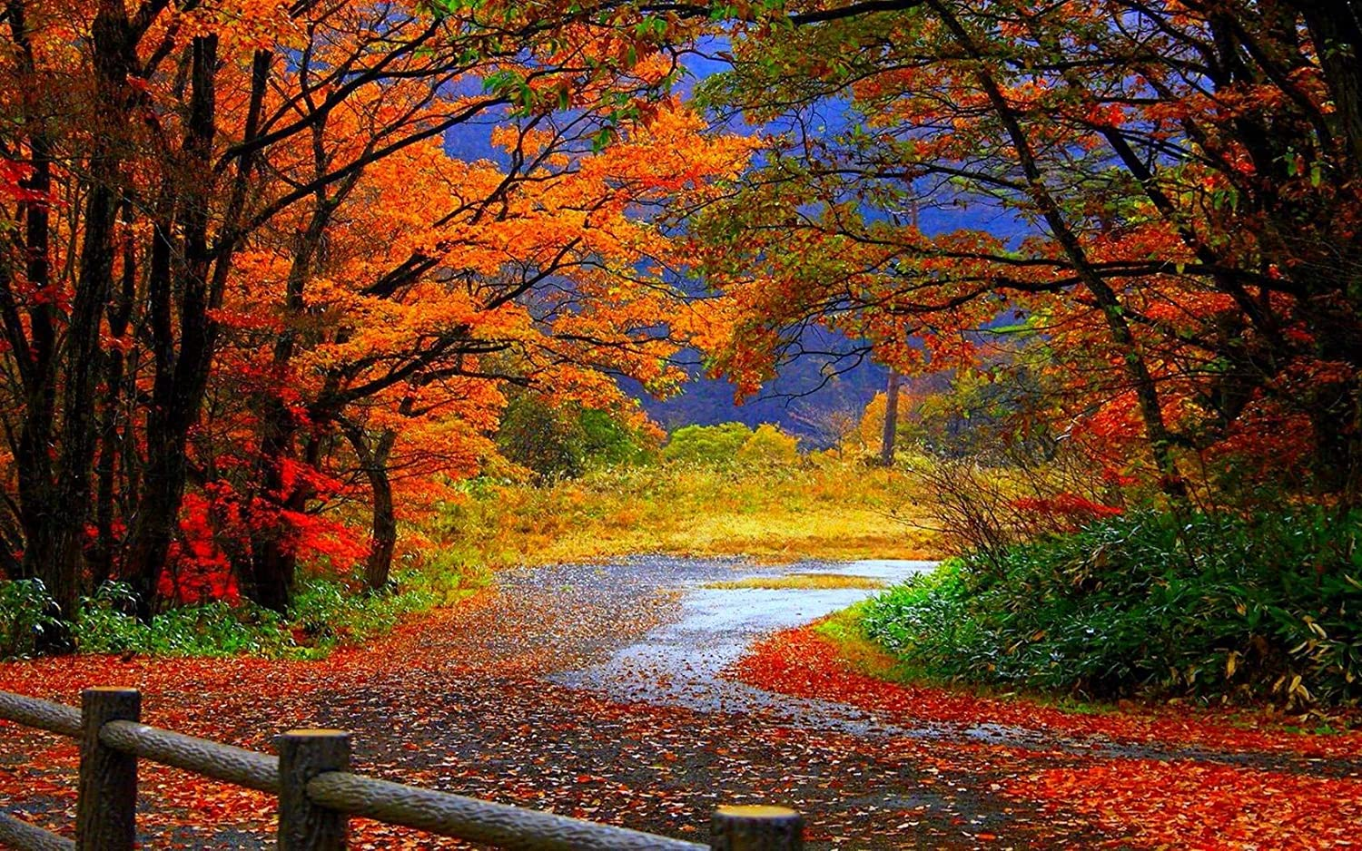 Buy Avikalp Exclusive Awi3274 Beautiful Road Falling Leaves Autumn Colorful Trees Nature Scenery Full Hd Wallpapers 152cm X 121cm Online At Low Prices In India Amazon In