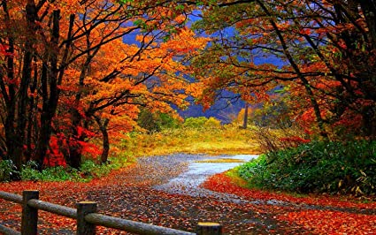 Avikalp Exclusive Awi3274 Beautiful Road Falling Leaves Autumn Colorful Trees Nature Scenery Full HD Wallpapers For
