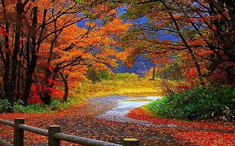 Buy Avikalp Awi3274 Beautiful Road Falling Leaves Autumn