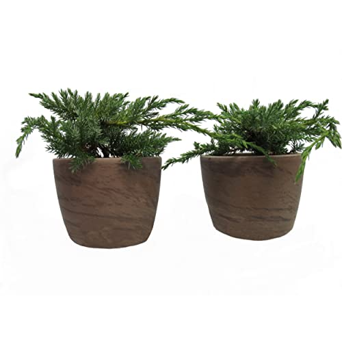 Terassen Pflanzen: Amazon.de