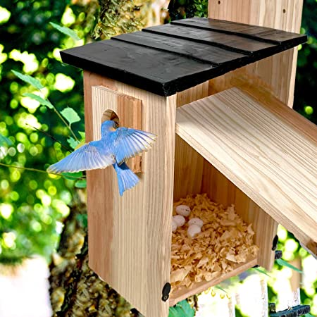 Hand-Mart Bird Nesting and Feeder House-14×7.5×7 inch Solid Premium Pine Wood Outside, Weatherproof Box House Designed for Easy Cleaning, Secure Latch, Air Vents. Cedar Shavings Included.