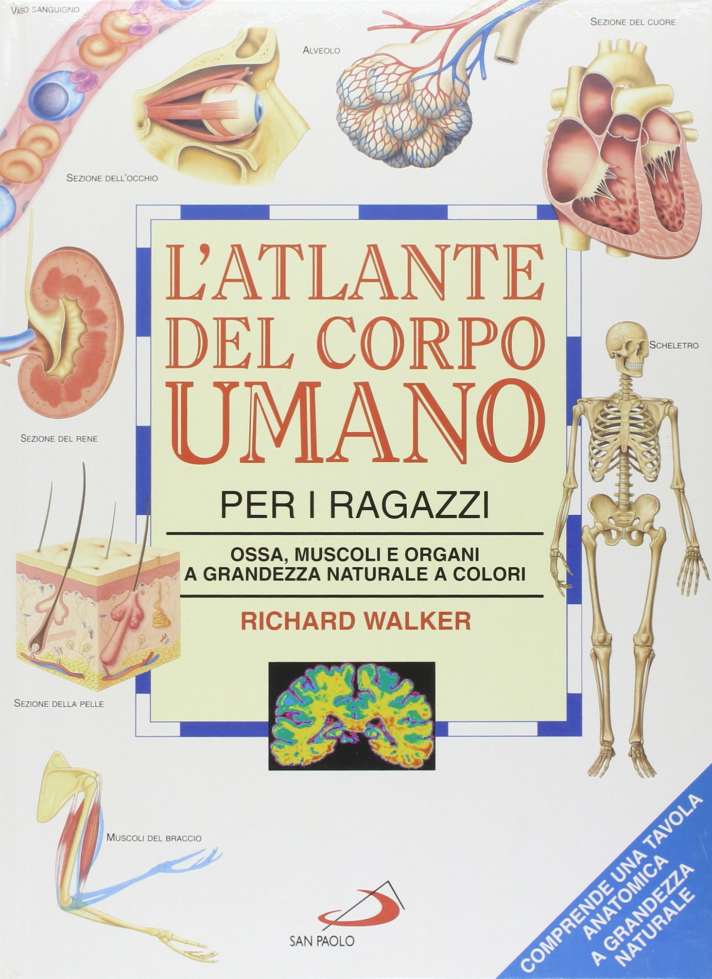 Favorito Amazon.it: L'atlante del corpo umano per i ragazzi. Ossa, muscoli  ZW89