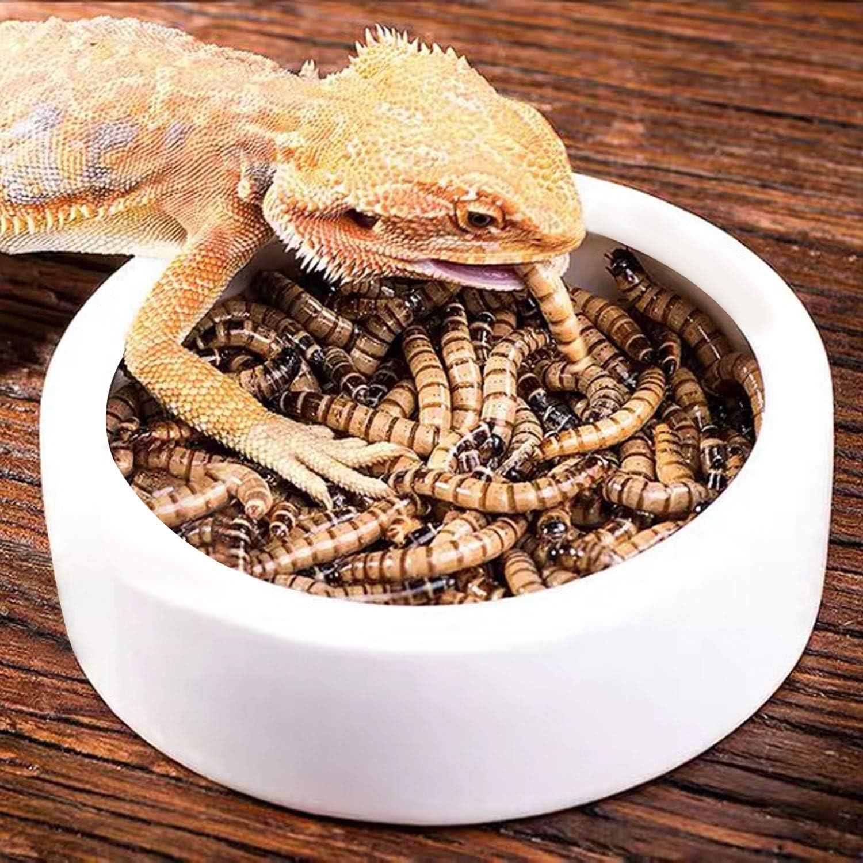 4 Pack Worm Dish Reptile Food Bowl, Ceramics Made, Lizard, Gecko Food Dish(3.7inch)