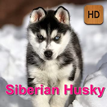 Amazon Com Siberian Husky Appstore For Android