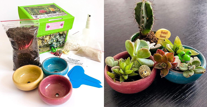 Sukkulenten & Kakteen Anzuchtset, Indoor-Garten,Gartengeschenk,Viele Pflanzenarten (Lebende Steine,Echeveria, Kakteen) grow your secret garden