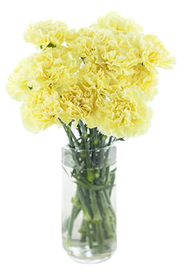 Amazon yellow carnation bouquet 12 stems with vase yellow carnation bouquet 12 stems with vase mightylinksfo