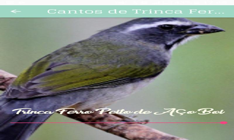 GRATIS BOIADEIRO TRINCA CANTO BAIXAR DE FERRO