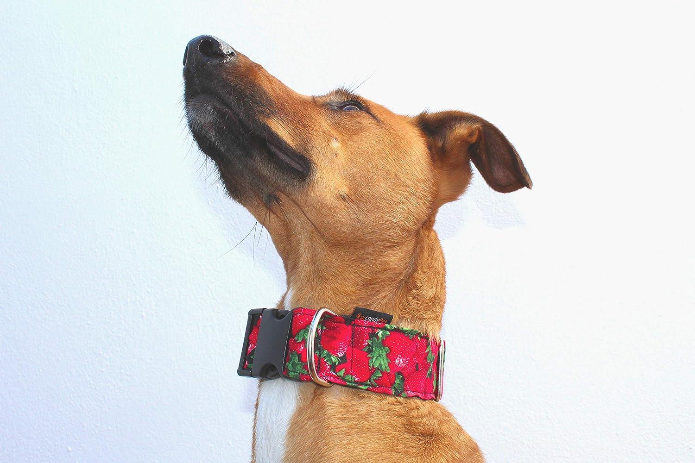 candyPet Collar Click para Perros - Modelo Fresas: Amazon.es ...