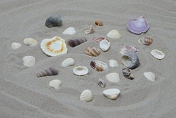 Doubleyou Geovlies U0026 Baustoffe Deko Sand Mit Muscheln Hell Zum Dekorieren,  Deko, Beach