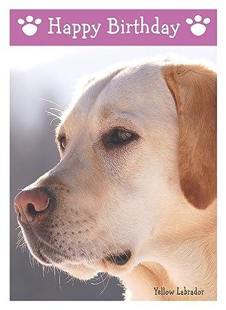 Yellow Labrador Dog Birthday Card