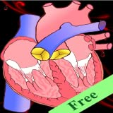 Heart defects Free