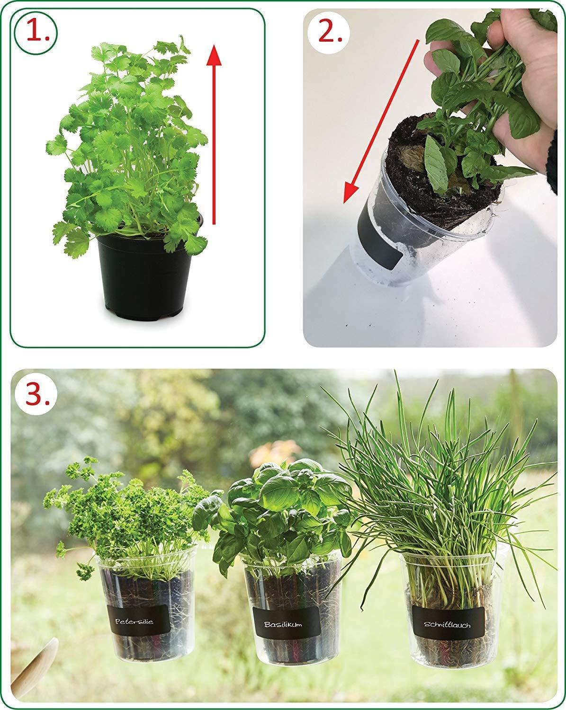 Fresh Herbs Trio Ventana Decoraci/ón de maceta de Trio Basil para cocina ventana Incluye beschriftung pantalla y tiza hierbas Regalo di/ámetro 13/cm altura: 16/cm Jard/ín hierbas Jard/ín